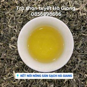 Trà shan tuyết cổ thụ Hà Giang